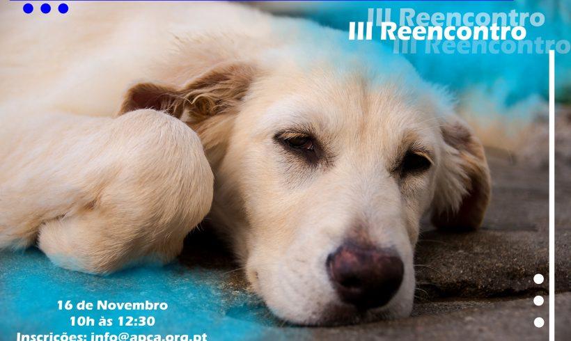 3º Passeio de reencontro de cães adoptados na APCA
